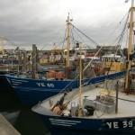 Mosselboten in de haven